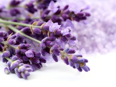 How and when to prune your Lavender