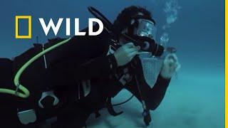 Monster Fish - sezon nou n noiembrie, pe Nat geo Wild