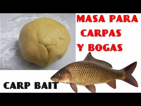 como hacer masa para pescar carpa