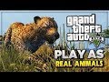 GTA 5 - PLAY AS A WILD ANIMAL IN GTA 5! UNLOCK ANIMALS FOR DIRECTOR MODE GLITCHED OUTFITS! XBOX ONE!