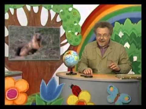 География 25. Животный мир степи — Шишкин