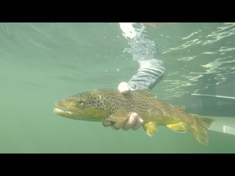 Arkansas Wildlife - S6.E1, Ozark Smallies And Trout Fishing
