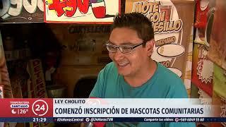 Ley Cholito: Preocupación en varias comunas del país por aumento de perros callejeros