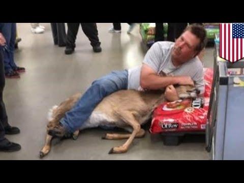 Customer tackles deer in Minnesota Walmart pet aisle - TomoNews