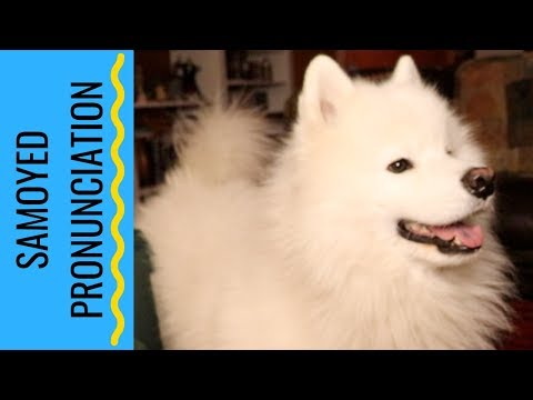 How to Pronounce Samoyed