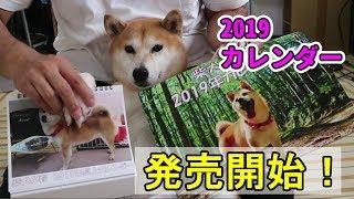 柴犬小春 2019年版カレンダー発売開始です!