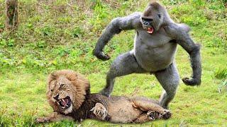 Приматы Спасают Своих Детей от Диких Хищников! Ты Должен Это Увидеть!