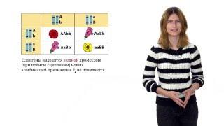 Дигибридное и полигибридное скрещивание. Решение генетических задач - 6