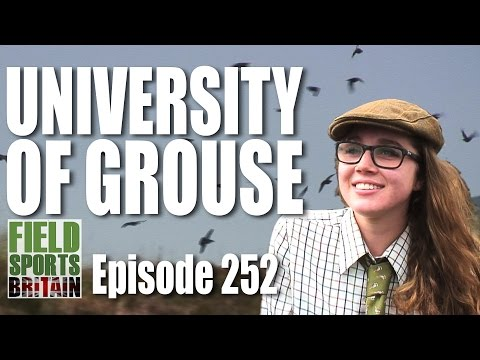 Fieldsports Britain - University of Grouse