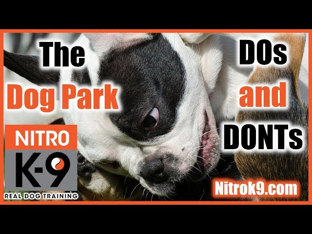 Dog parks - should we go there? Rules and guidelines (podcast)