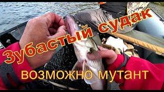 Рыбалка в дождь и ветер Судак мутант зубастый как чужой