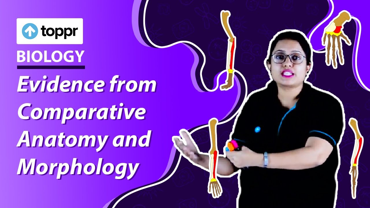 Class 12 Biology Evolution Evidence From Comparative Anatomy And