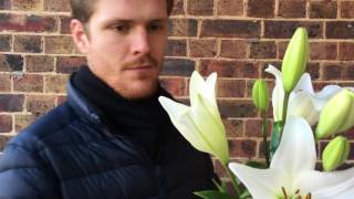 George shows us how to remove pollen from lilies, before the anther opens