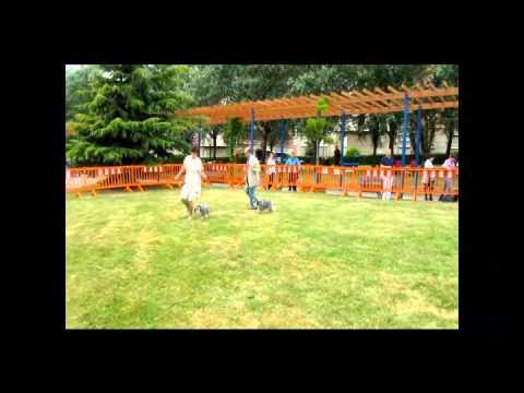 EXPOSICIÓN CANINA INTERNACIONAL DE PORTUGALETE 2012- ESPECIAL SCHNAUZER -VIZCAYA