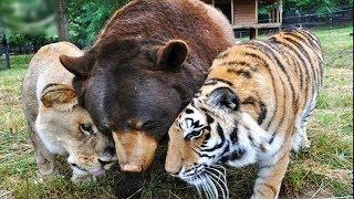 10 Video Bất Ngờ Về TÌNH YÊU Giữa Những Loài Động Vật Không Đội Trời Chung