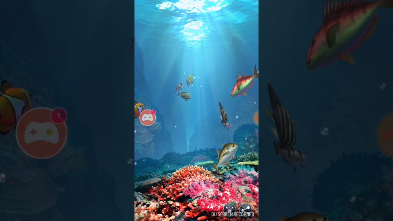 How To Set Up A Freshwater Aquarium - Fish Tank Setup Guide