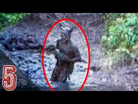 5 Avvistamenti Di Creature Inquietanti Filmati A Video