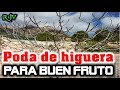 Video de Higueras