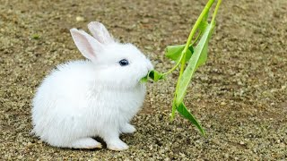 Cute rabbit baby
