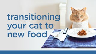 Transitioning Your Cat to New Food