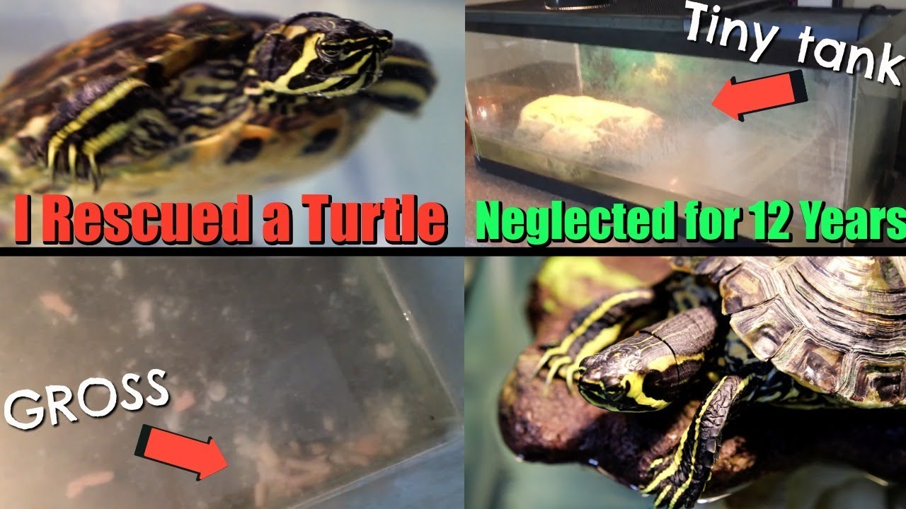 i-rescued-a-turtle-that-was-neglected-for-over-12-years