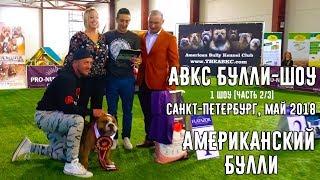 Смотреть видео ABKC Булли-Шоу. Санкт-Петербург май, 2018. 1-ое шоу [Часть 2/3] онлайн