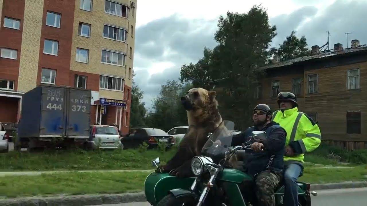 Разогнался на Приоре, а тут Опель на дороге. Северодвинск. - YouTube