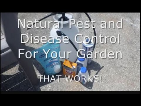 #50 Natural cheap garden pest & disease control that works