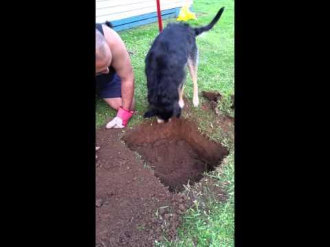 Dog helps bury beloved cat