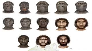 Hominoids, Hominids and Hominidae