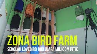 DUNIA HOBI : Zona Bird Farm - Sekolah Lovebird Jadi Juara Nasional