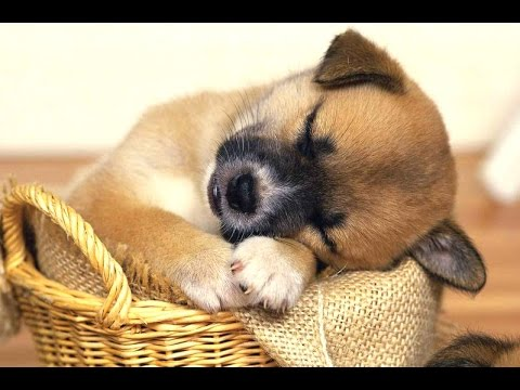 Cutest Puppies Dreaming Compilation 2014 [NEW]