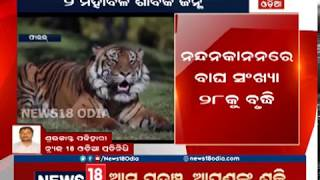 Two tiger cubs took birth in the Nandankanan Zoological Park