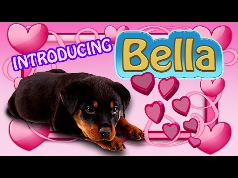 Rottweiler/Labrador Mix,Introducing Bella The Puppy!!!