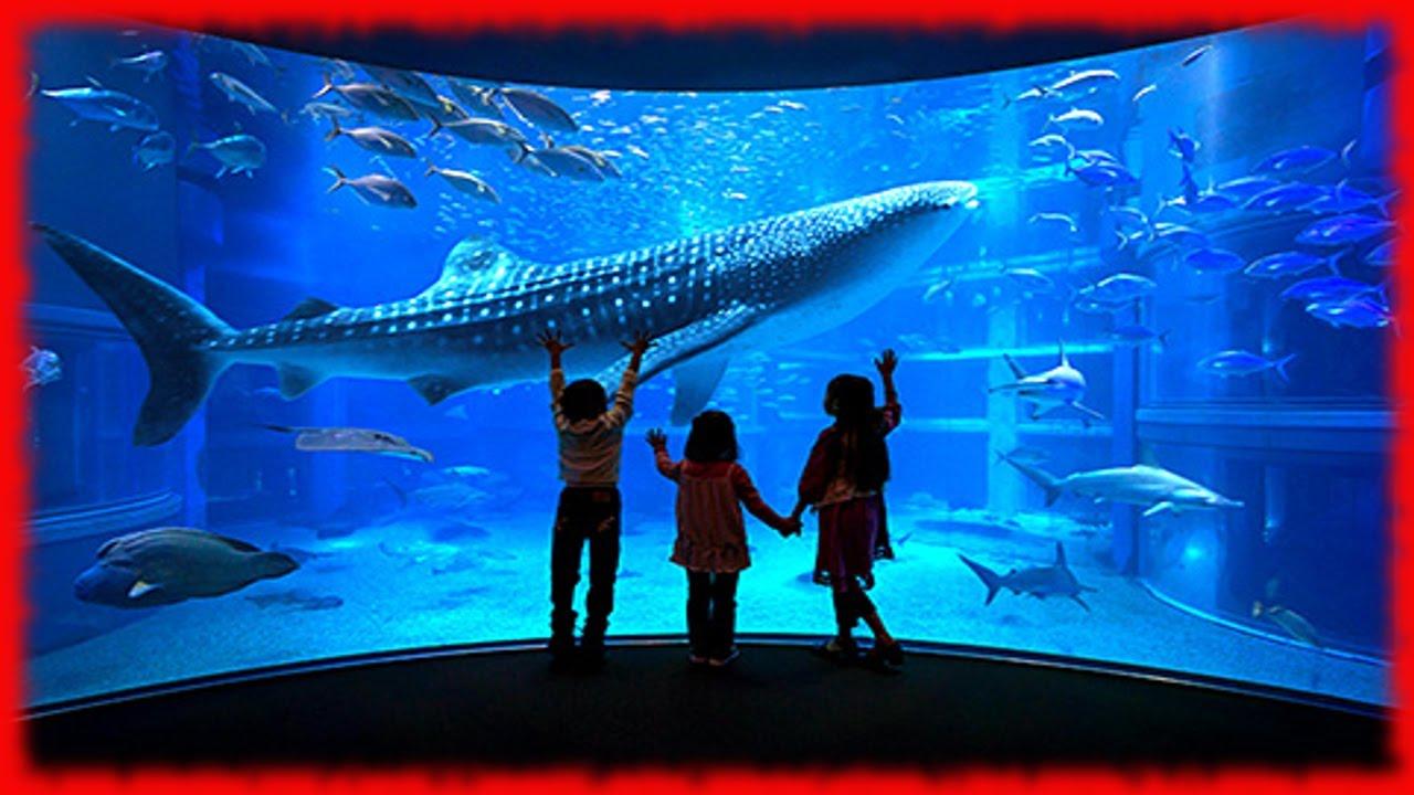 DIY Aquarium Bucket Filter. Fish Tank/Pond Canister Filter .