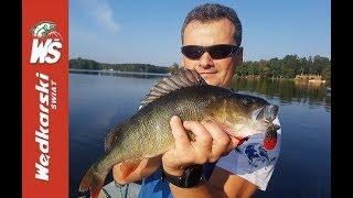 Duży okoń 45cm i ładny jaź złowione na obrotówkę w Polskim jeziorze .