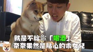 【柴犬Nana(奈奈)】就是不給把拔「喝酒」 超級貼心乖巧的奈奈