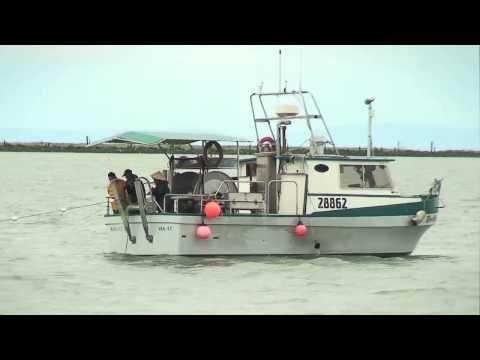 Fishing With Rod: Fraser Sockeye Harvest
