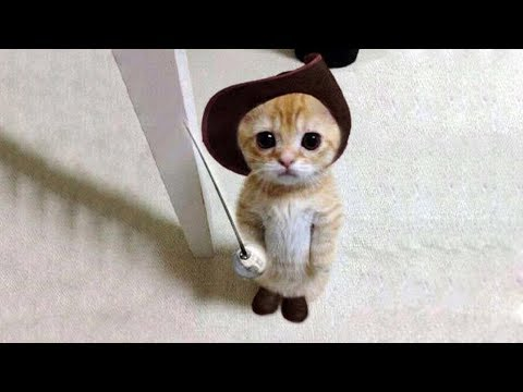 Cute is Not Enough - Funny Cats and Dogs Compilation #123