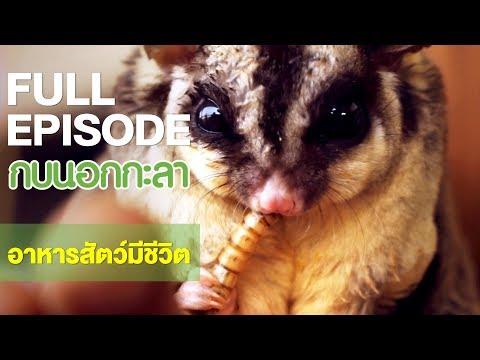 อาหารสัตว์ มีชีวิต - Full - วันที่ 01 Mar 2018