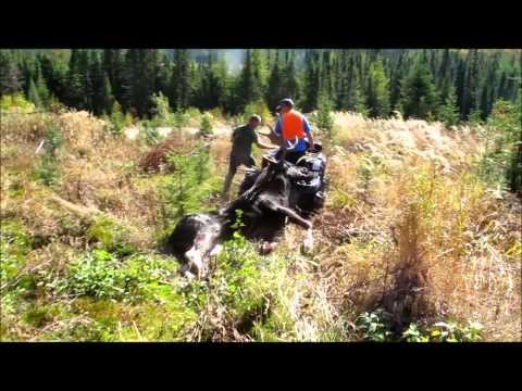 Moose Hunt - Reserve Faunique Des Laurentides 2014 - Chasse A L'orignal