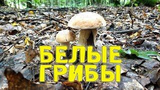 видео Почему полезно собирать грибы в лесу