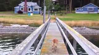 Lopez Island Dock - Mud Bay - San Juan Islands