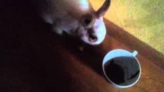 Самое милое видео на свете, кролик кушает яблоко