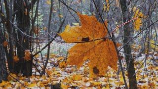 Красивая Природа в Осеннем Лесу под музыку  Для Релаксации и для Души | Золотая Осень |  4K Ultra HD
