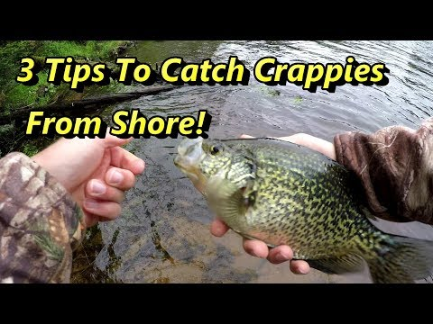 3 Crappie Fishing Tips Guaranteed To Catch Crappies From Shore!