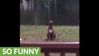 Depressed dog sits alone in the rain
