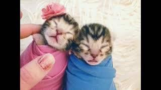 Newborn kittens in the studio