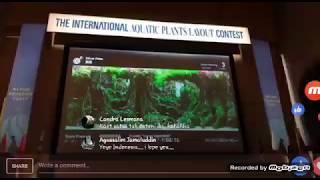 prayogi aquascape  IAPLC 2017