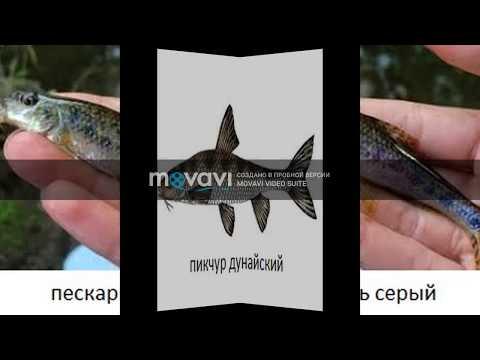 Красная книга Украины РЫБА